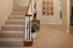 entry way of home with carpeted beige stairs