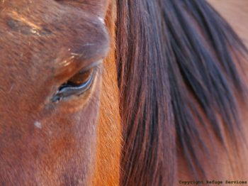closeup of beautiful brown horse's face and eye