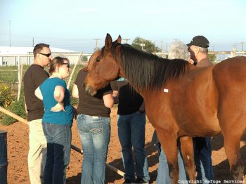 Equine therapy with Refuge Services at Ranch at Dove Tree